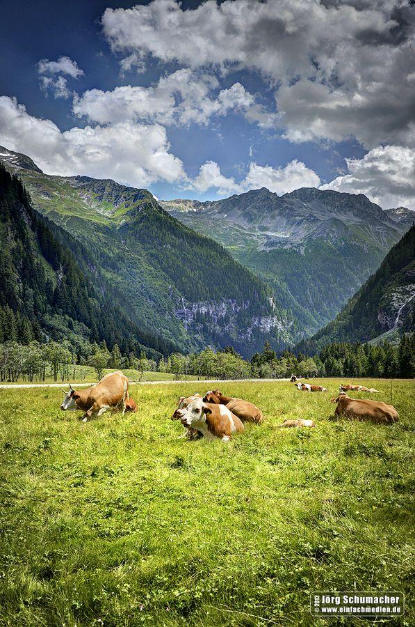 """Seebachtal """"Schwussnerhütte"""" in Kärnten, Österreich » #Kühe #Berge #Österreich #Kärnten #Cows #Mountain #Austria"""