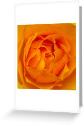When roses turn orange...  by steppeland. blank inside  Price: €1.96 - Check discounts!