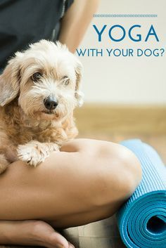 Here's something interesting! Did you know dogs are naturals at doing yoga? Find out how to learn 'downward dog' with your dog!