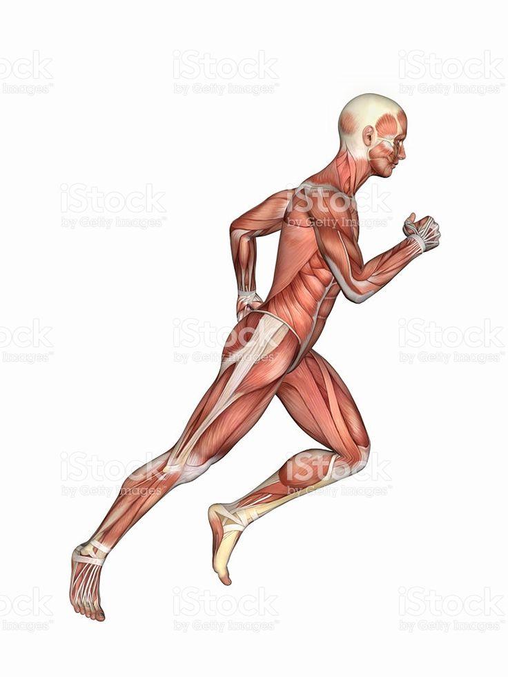 Mejores 10 imágenes de Anatomy Illustrations en Pinterest   Anatomía ...