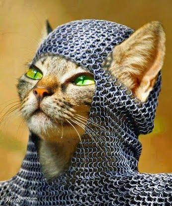 #воин #кот