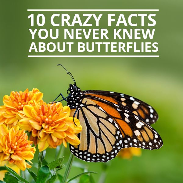 March 14 is Learn About Butterflies Day, making this the perfect opportunity to explore some little known butterfly facts.