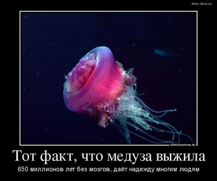 то, у медуз нет сердца картинки друг другом здоровья