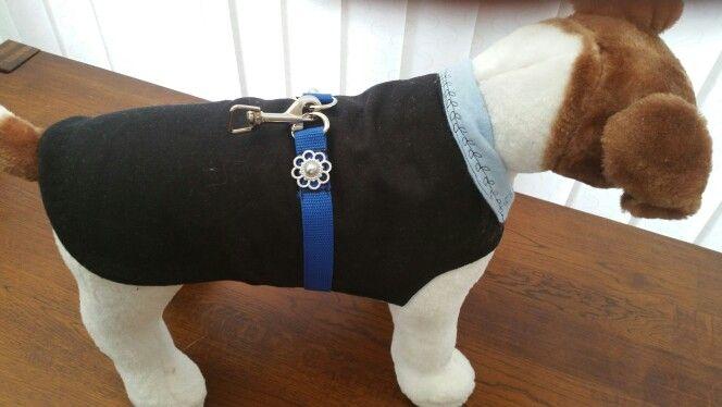 Black and blue cashmere dog coat