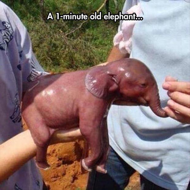 Infant Elephant. Kinda aw, mostly ew.