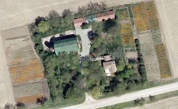 Oxford County, Ontario Tulip farm