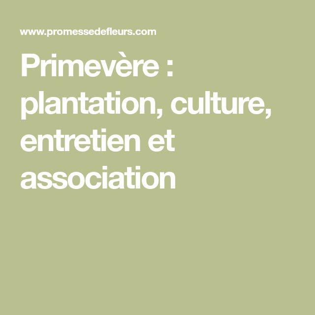 Primevère : plantation, culture, entretien et association