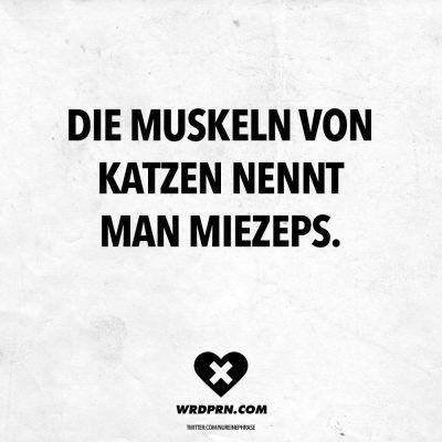 Die Muskeln von Katzen nennt man Miezeps.