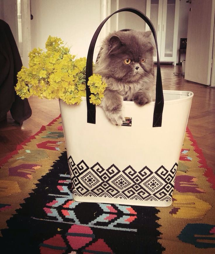 Funny adorable cat in the purse