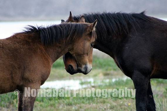 Wild horses of Kleinmond, South Africa.