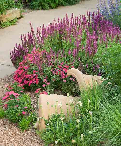 secret garden on urban plot dry garden bed with broken pots in soil, perennial flowers, pink friesland salvia, dianthus, white sun daisy