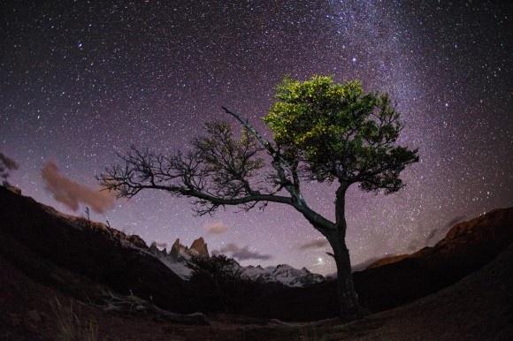 """Max Seigal wanderte mehrere Stunden mitten in der Nacht durch Patagonien, um einen Baum wiederzufinden, den er wenige Tage zuvor gesehen hatte, um ihn vor den Nachthimmel zu fotografieren. Dass sich die Mühe gelohnt hat, zeigt diese Aufnahme, die er beim Reise-Fotowettbewerb 2013 des """"National Geographic"""" eingereicht hat."""