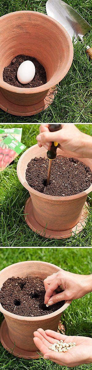 Kräutergarten im Pott auf einem Ei. Das Ei gilt als natürliches Düngemittel unten im Pott platziert. Darauf kann man aussähen oder eine fertige Pflanze einpflanzen. | Пряные травы в горшке на сыром яйце. Яйцо кладут в горшок вниз, сверху можно высевать или сажать готовое растение.
