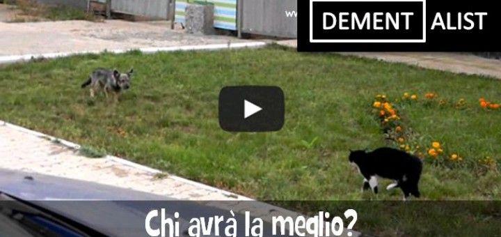 Cane VS Gatto sfida tipo film western dal finale esilarante