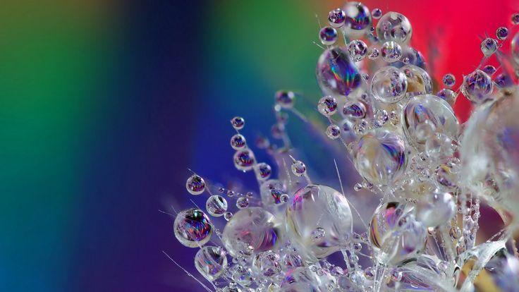 Удивительные капельки и пузырьки 30 кадров макросъемки