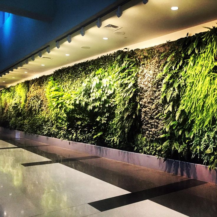 WOW!   Check out this amazing @GreenOverGrey Interior Living Wall at BHM Airport!   cc: @greengaljo