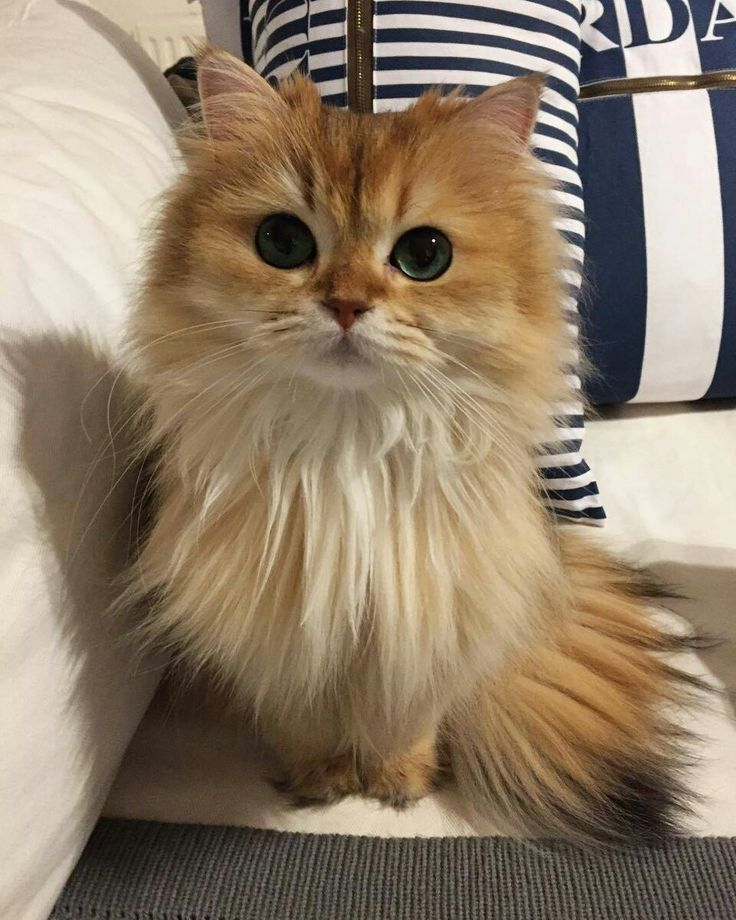 Pin by amani on S. Cute cats, Cute animals, Pretty cats