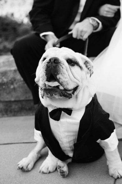 Bulldog in a tux....haha! This will be Turbo in our wedding!