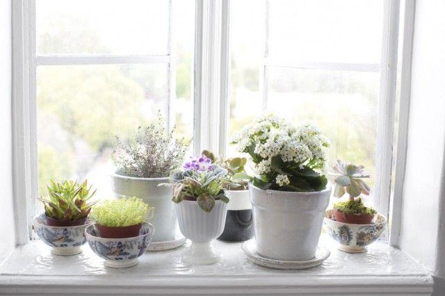 Питательные средства для комнатных растений