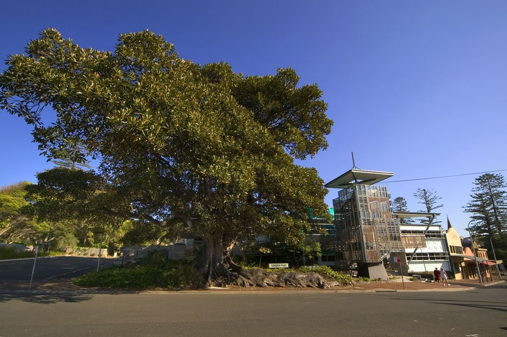 Kiama Library  #architecture #cultural #community #design #nsw #kiama #beach #library #glass #fig #tree #streetscape