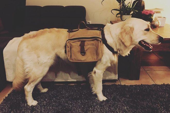 Der Hunde-Rucksack I Wandern mit Hund