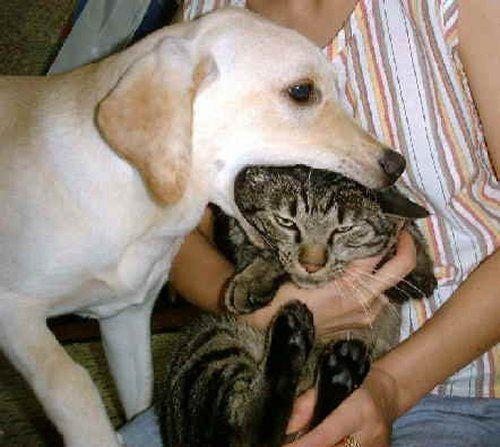 don't eat me !Supervi Kitty, Funny Cat, Cat Φωφ, R Funny, Image, Poor Cat, Cat Cat, Cat Dogs, Animal