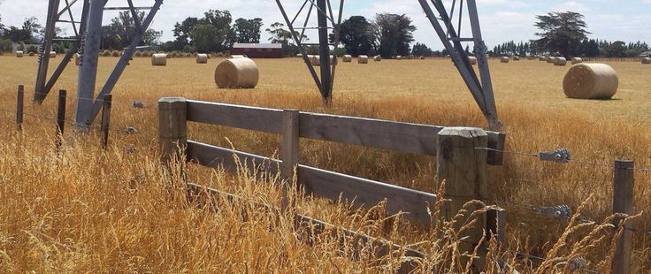 Highly commended. Hay bales heading out to Marty on the Greytown Road by Paula