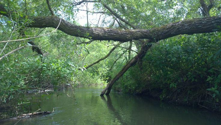 Czech Adventures event - Crossing tree trunks in canoe.