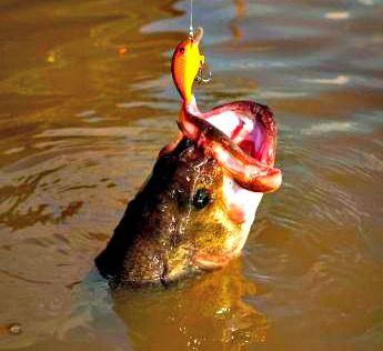 Baits for late summer bass bass fishing rocks for Best lures for summer bass fishing