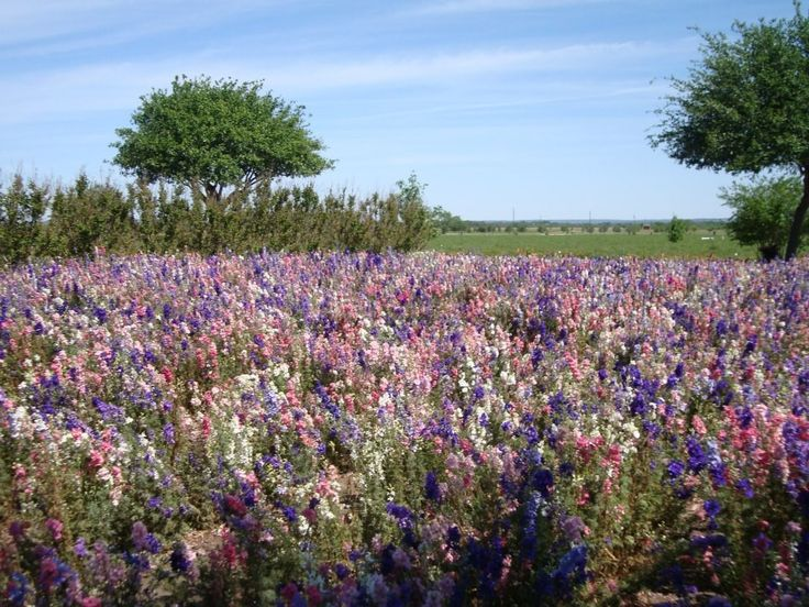 It's the time of year when all good Texas moms drag their offspring out to the side of road, random fields, or Interstate medians to plop them down among our state flower to take the quintessential spring Texas picture: cuteness in the beauty of bluebonnets. It's a rite of passage, and if you don't get …