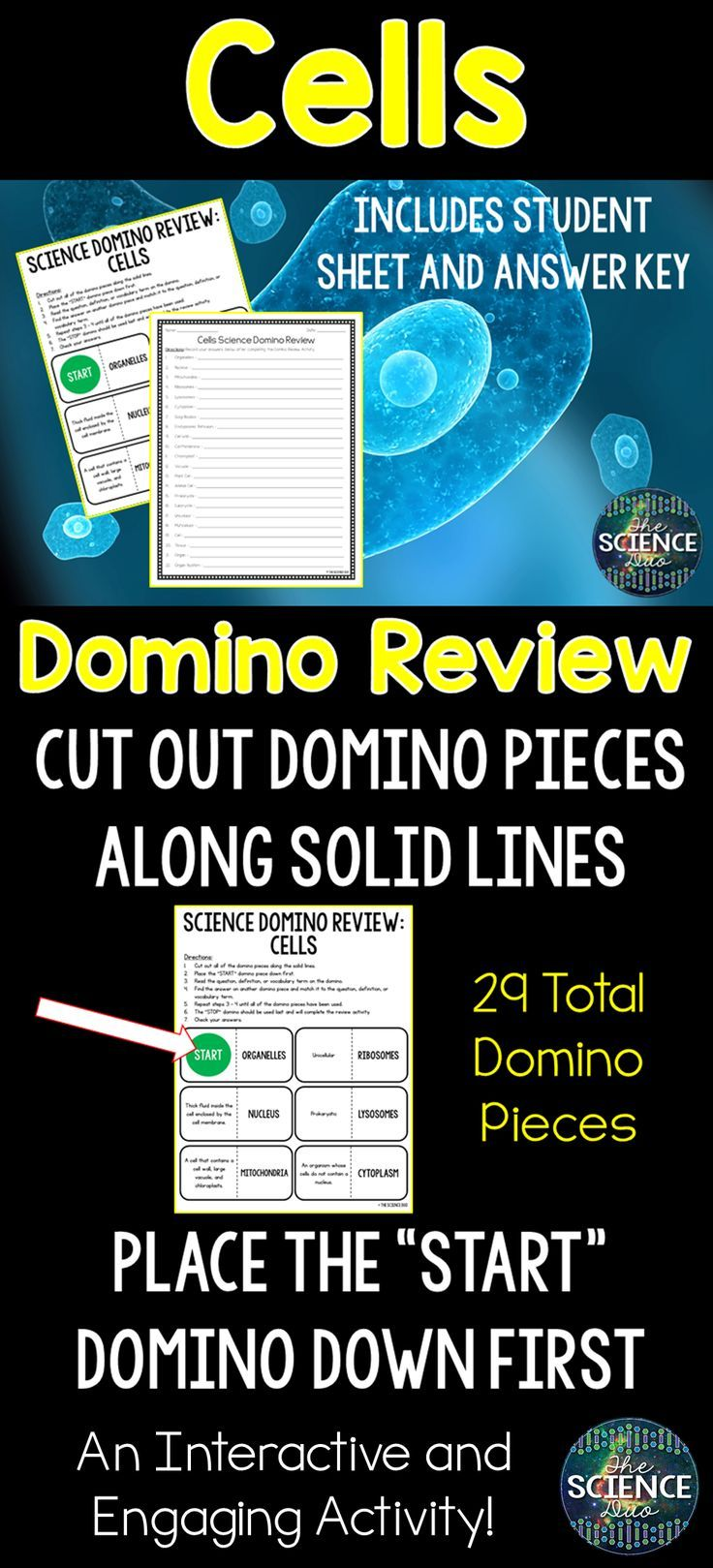 Cells Domino Review Plant Animal Cells Cell Structure