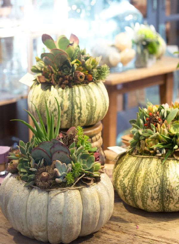 Pick interesting pumpkins and plant them with pretty succulents These will last all season if you place the plants in a pot and then into the pumpkin!