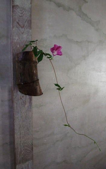 ikebana Simple Beauty Ivy and the pandora's vine & Mandevillea