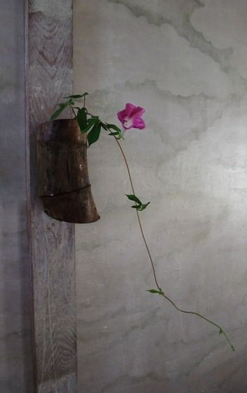 ikebana Simple Beauty Ivy and the pandora's vine & Mandevillea