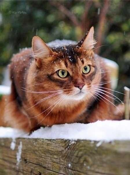 """""""Cats are smarter than dogs. You cannot get 8 cats to pull a sled through the snow."""" --Jeff Valdez"""