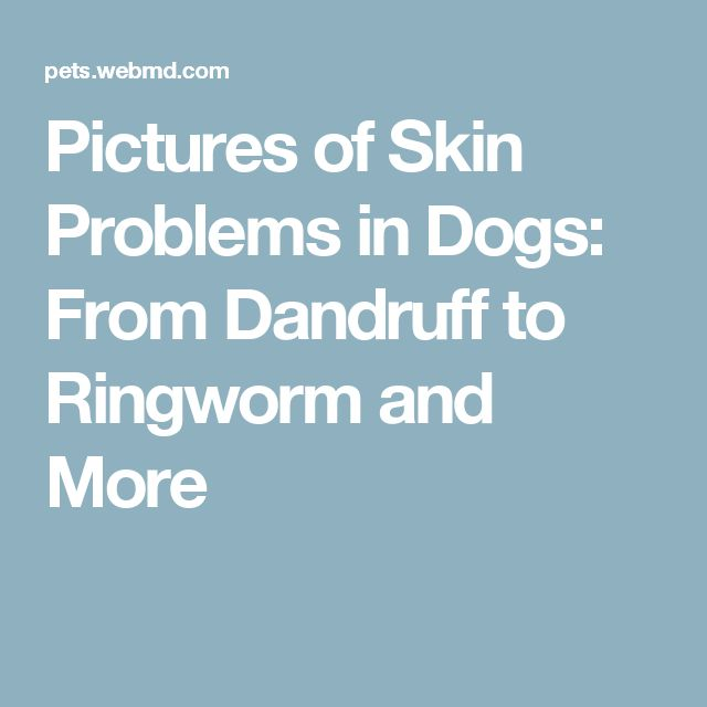 Pictures of Skin Problems in Dogs: From Dandruff to Ringworm and More