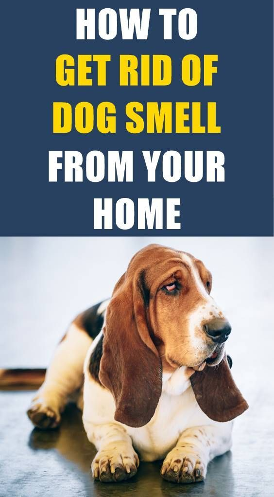 Do you want to remove the dog smell from your home but