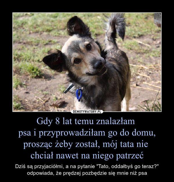 """Gdy 8 lat temu znalazłam psa i przyprowadziłam go do domu, prosząc żeby został, mój tata nie chciał nawet na niego patrzeć – Dziś są przyjaciółmi, a na pytanie """"Tato, oddałbyś go teraz?"""" odpowiada, że prędzej pozbędzie się mnie niż psa"""