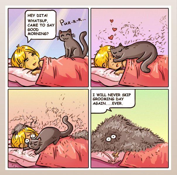cat comics, funny cute
