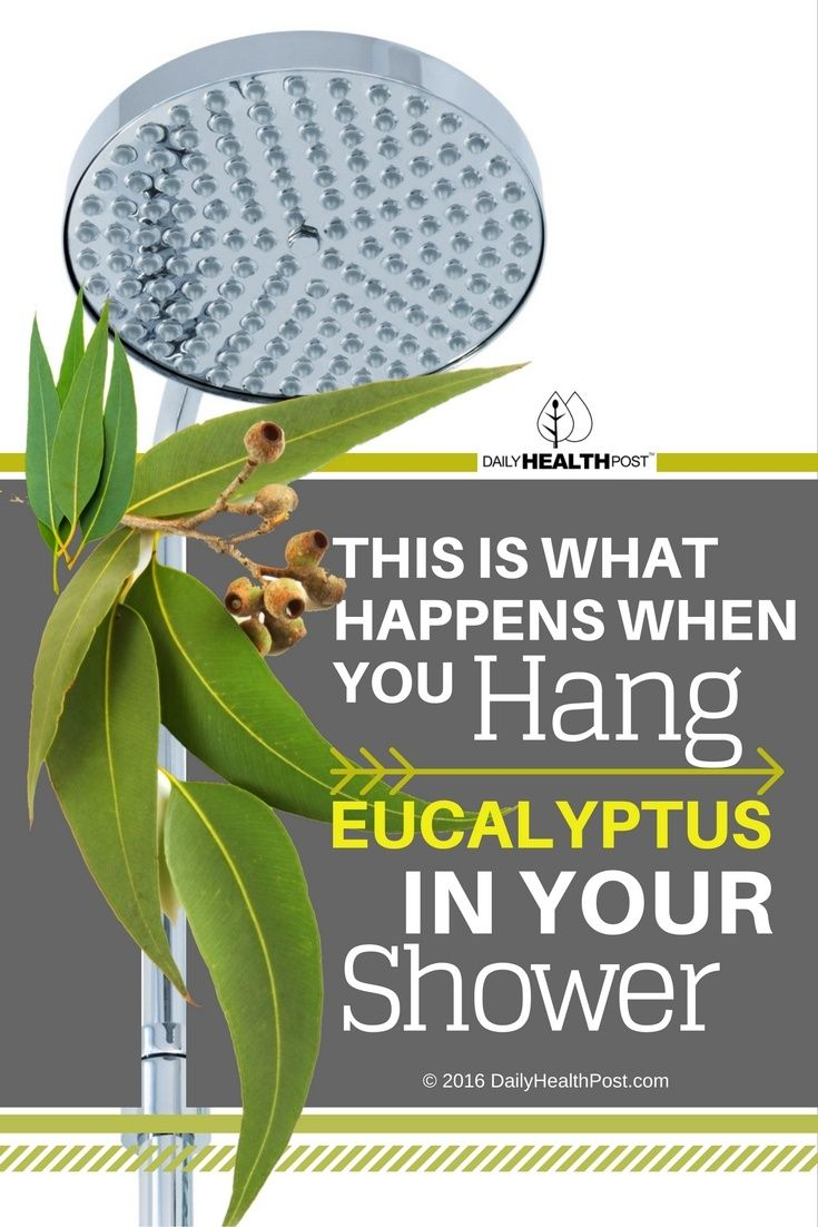Taking it to the next level often involves�artificially scented�soaps and hair products, but there are natural ways to improve your shower routine. One simple and yet very�effective trick�is to hang eucalyptus from your shower head.