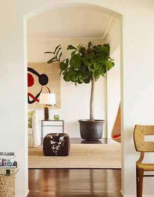 Fiddle Leaf Fig love these plants for an inside plant: Dining Rooms, Living Rooms, Elle Decor, Fiddleleaf, Indoor Trees, Figs Trees, Families Rooms, Indoor Plants, Fiddle Leaf Figs