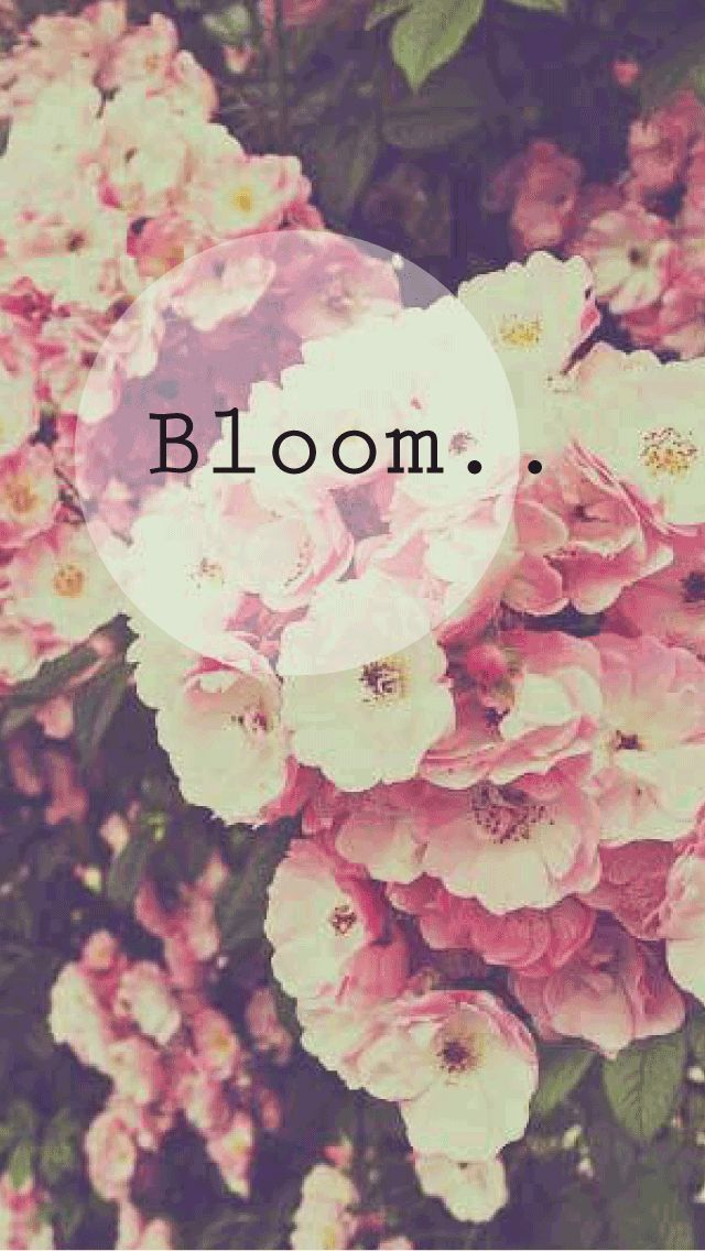 Bloom Phone Background Wallpaper Flower Spring Love