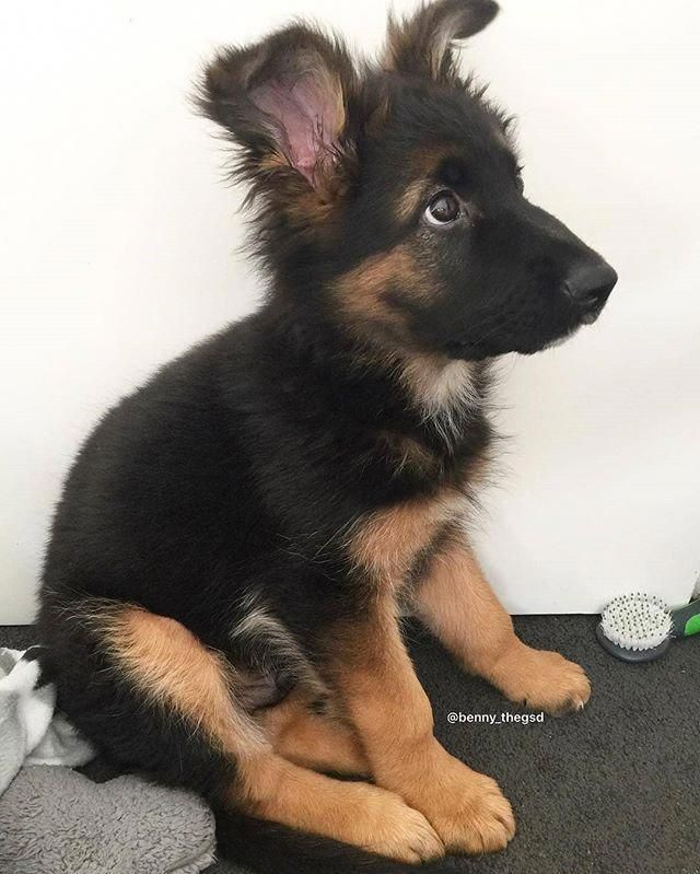 Get Excellent Recommendations On German Shepherd They Are