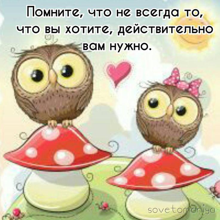 6 отметок «Нравится», 1 комментариев — Советоманиямудрые советы (@sovetomaniya) в Instagram: «#цитаты #мудрыеслова #мудрость #лайфхак #lifehacks #сова #owl #полезныесоветы #полезные_советы…»