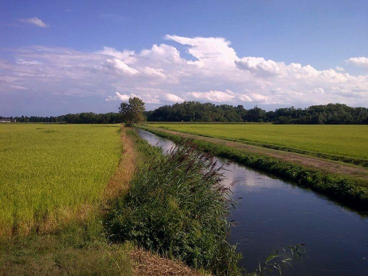 https://flic.kr/p/EZW2vB | Risaie nella provincia di Pavia   - Italia | Rice fields around Pavia  - Italy