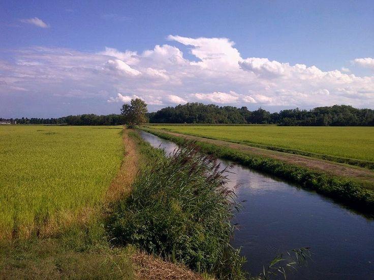 https://flic.kr/p/EZW2vB | Risaie nella provincia di Pavia   - Italia | Rice fields around Pavia  - Italy