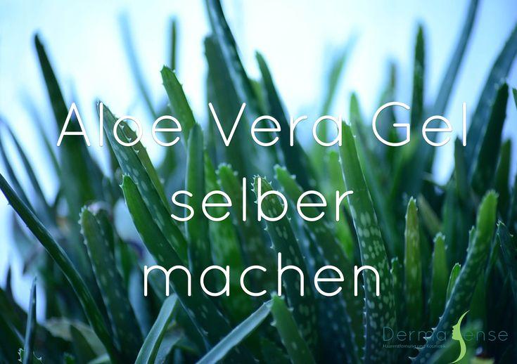 Aloe Vera ist gerade im Beauty Bereich eine Heilpflanze, der oft zu wenig Beachtung geschenkt wird. Am bekanntesten ist wohl ihre kühlende und beruhigende Wirkung auf der Haut. Zum Beispiel nach dem Sonnenbaden. Wir verwenden Aloe Vera auch gerne nach unseren Haarentfernungs-Behandlungen. Die Liste der möglichen Anwendungen ist jedoch noch viel länger. Mit dieser Pflanze …