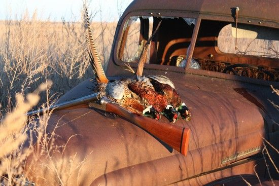 www.pinterest.com/1895gunner/ South Dakota Pheasant Hunting | Pheasant Hunting in SD