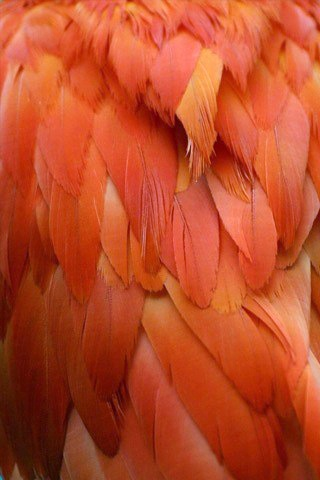 Ibis Feathers by Steffen Foerster