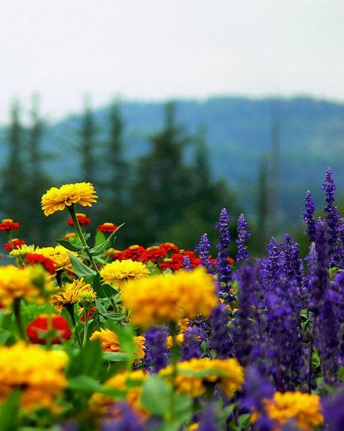 purplelovesyellow:    bie_flower_farm (by Brett Kropp)